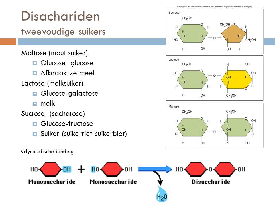 Disachariden tweevoudige suikers Maltose (mout suiker)  Glucose -glucose  Afbraak zetmeel Lactose (melksuiker)  Glucose-galactose  melk Sucrose (sacharose)  Glucose-fructose  Suiker (suikerriet suikerbiet) Glycosidische binding