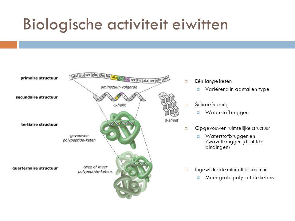 Biologische activiteit eiwitten  Eén lange keten  Variërend in aantal en type  Schroefvormig  Waterstofbruggen  Opgevouwen ruimtelijke structuur  Waterstofbruggen en Zwavelbruggen (disulfide bindingen)  Ingewikkelde ruimtelijk structuur  Meer grote polypetide ketens