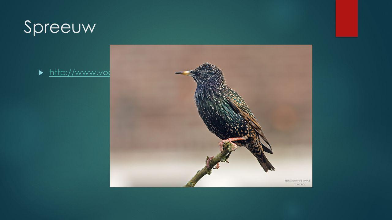 Spreeuw  http://www.vogelgeluid.nl/spreeuw http://www.vogelgeluid.nl/spreeuw