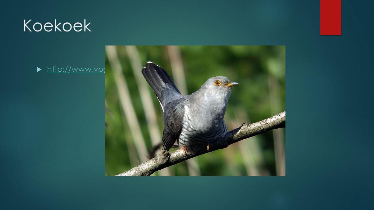 Koekoek  http://www.vogelgeluid.nl/koekoek http://www.vogelgeluid.nl/koekoek