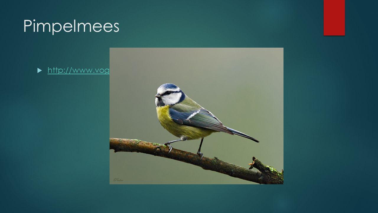 Pimpelmees  http://www.vogelgeluid.nl/pimpelmees http://www.vogelgeluid.nl/pimpelmees