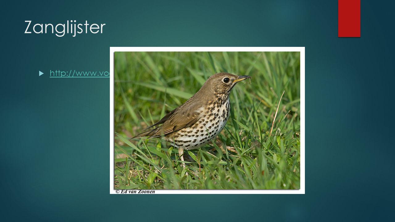 Zanglijster  http://www.vogelgeluid.nl/zanglijster http://www.vogelgeluid.nl/zanglijster
