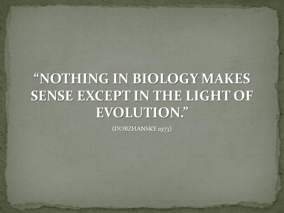 Genenpool verandert niet van generatie op generatie als er geen evolutie optreedt voor die eigenschap Frequenties van de allelen blijven van generatie op generatie gelijk  Verhouding waarin RR, Rr en rr voorkomen is te berekenen.