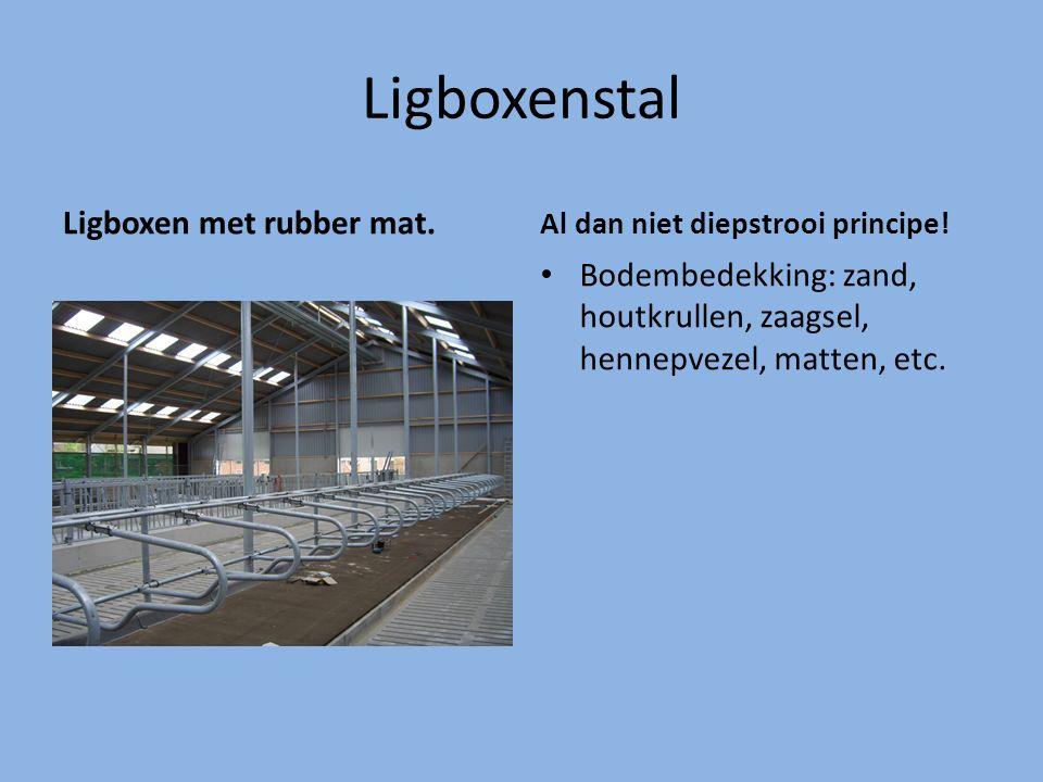 Ligboxenstal Ligboxen met rubber mat. Al dan niet diepstrooi principe! Bodembedekking: zand, houtkrullen, zaagsel, hennepvezel, matten, etc.