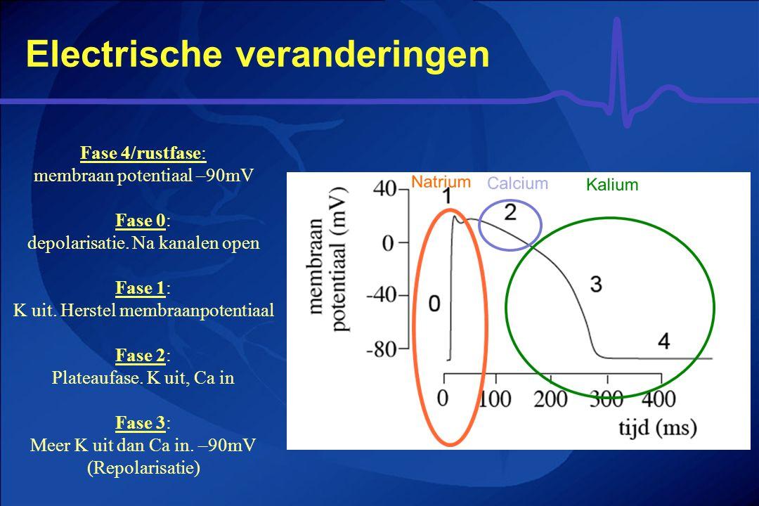Electrische veranderingen Fase 4/rustfase: membraan potentiaal –90mV Fase 0: depolarisatie. Na kanalen open Fase 1: K uit. Herstel membraanpotentiaal