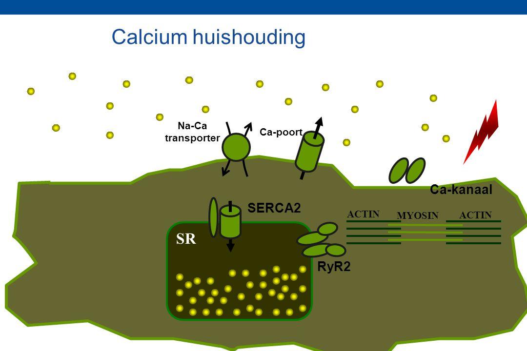 RyR2 SERCA2 ACTIN MYOSIN SR Ca-poort Na-Ca transporter Ca-kanaal Calcium huishouding