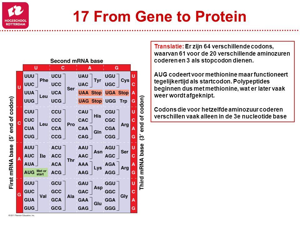 17 From Gene to Protein Translatie: Er zijn 64 verschillende codons, waarvan 61 voor de 20 verschillende aminozuren coderen en 3 als stopcodon dienen.