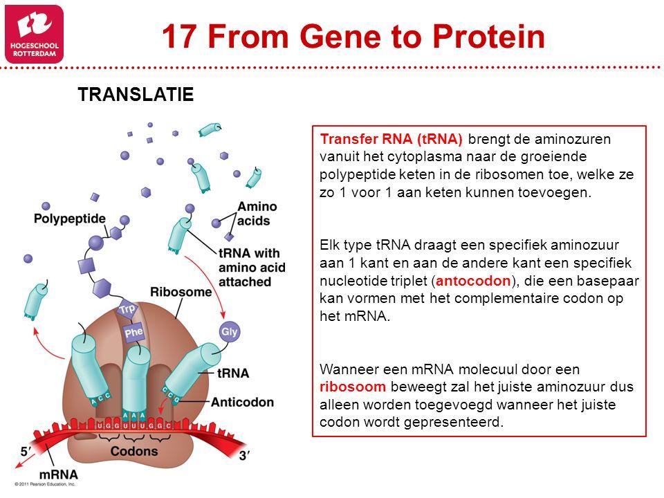 17 From Gene to Protein TRANSLATIE Transfer RNA (tRNA) brengt de aminozuren vanuit het cytoplasma naar de groeiende polypeptide keten in de ribosomen toe, welke ze zo 1 voor 1 aan keten kunnen toevoegen.