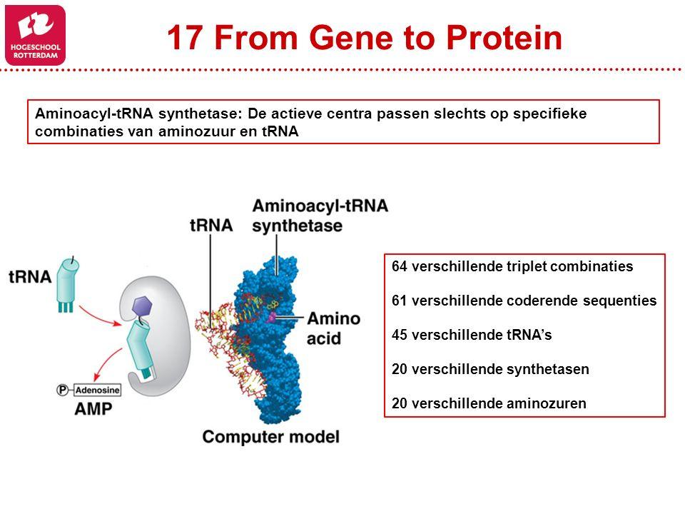 17 From Gene to Protein Aminoacyl-tRNA synthetase: De actieve centra passen slechts op specifieke combinaties van aminozuur en tRNA 64 verschillende triplet combinaties 61 verschillende coderende sequenties 45 verschillende tRNA's 20 verschillende synthetasen 20 verschillende aminozuren