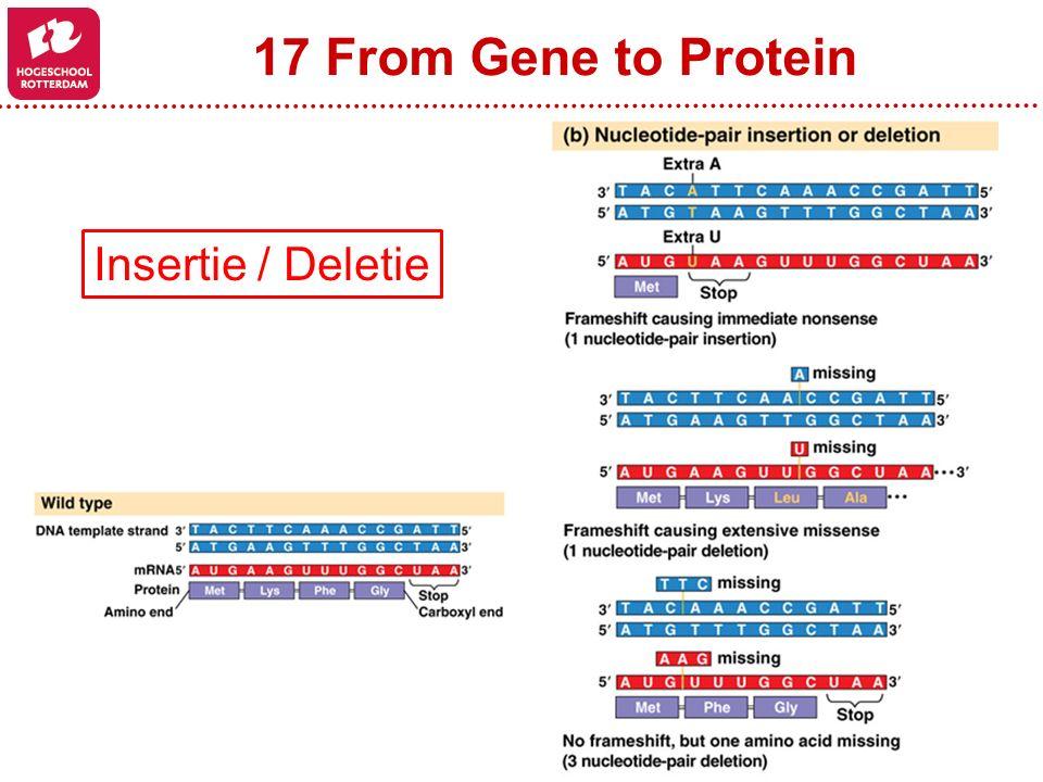 17 From Gene to Protein Insertie / Deletie