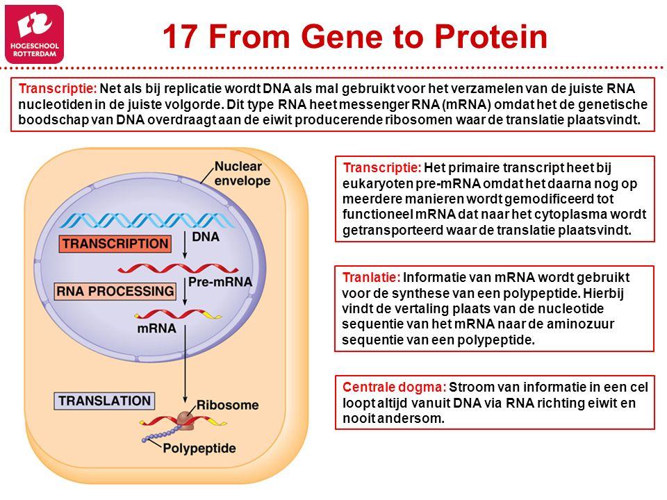 17 From Gene to Protein Transcriptie: Net als bij replicatie wordt DNA als mal gebruikt voor het verzamelen van de juiste RNA nucleotiden in de juiste volgorde.