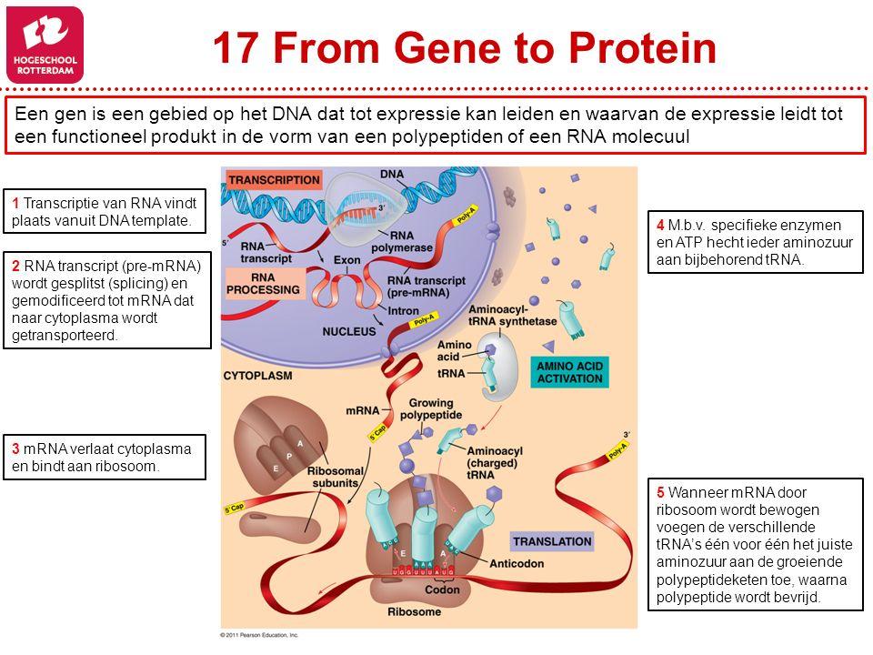 17 From Gene to Protein Een gen is een gebied op het DNA dat tot expressie kan leiden en waarvan de expressie leidt tot een functioneel produkt in de vorm van een polypeptiden of een RNA molecuul 1 Transcriptie van RNA vindt plaats vanuit DNA template.