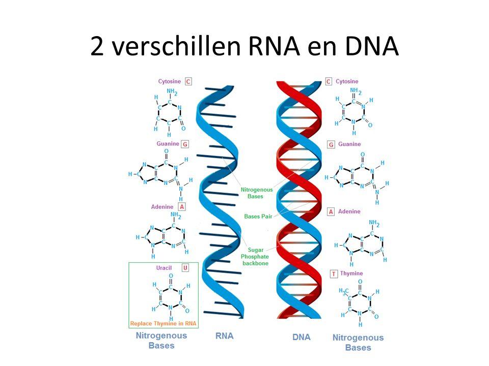 2 verschillen RNA en DNA