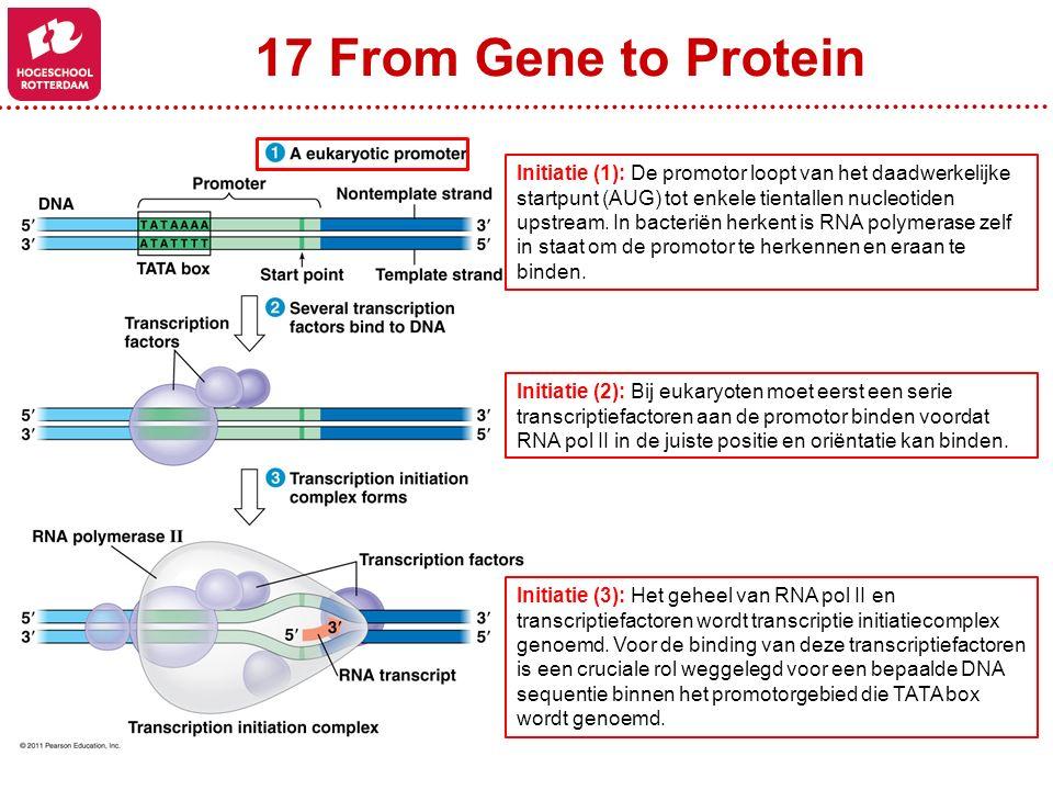 17 From Gene to Protein Initiatie (1): De promotor loopt van het daadwerkelijke startpunt (AUG) tot enkele tientallen nucleotiden upstream. In bacteri