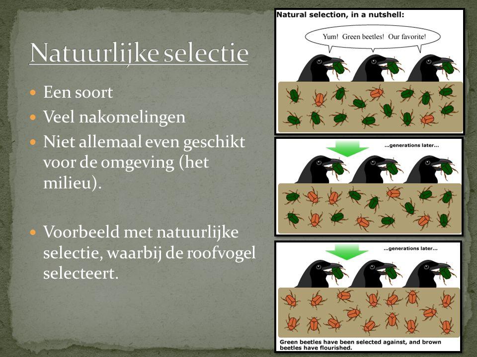 Een soort Veel nakomelingen Niet allemaal even geschikt voor de omgeving (het milieu). Voorbeeld met natuurlijke selectie, waarbij de roofvogel select
