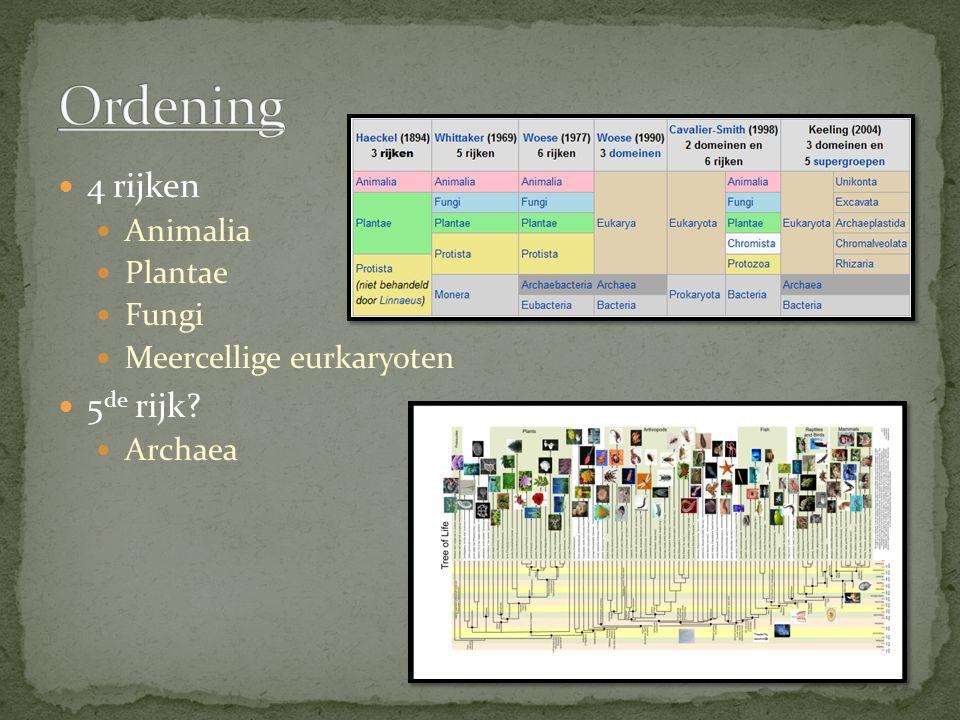 4 rijken Animalia Plantae Fungi Meercellige eurkaryoten 5 de rijk? Archaea