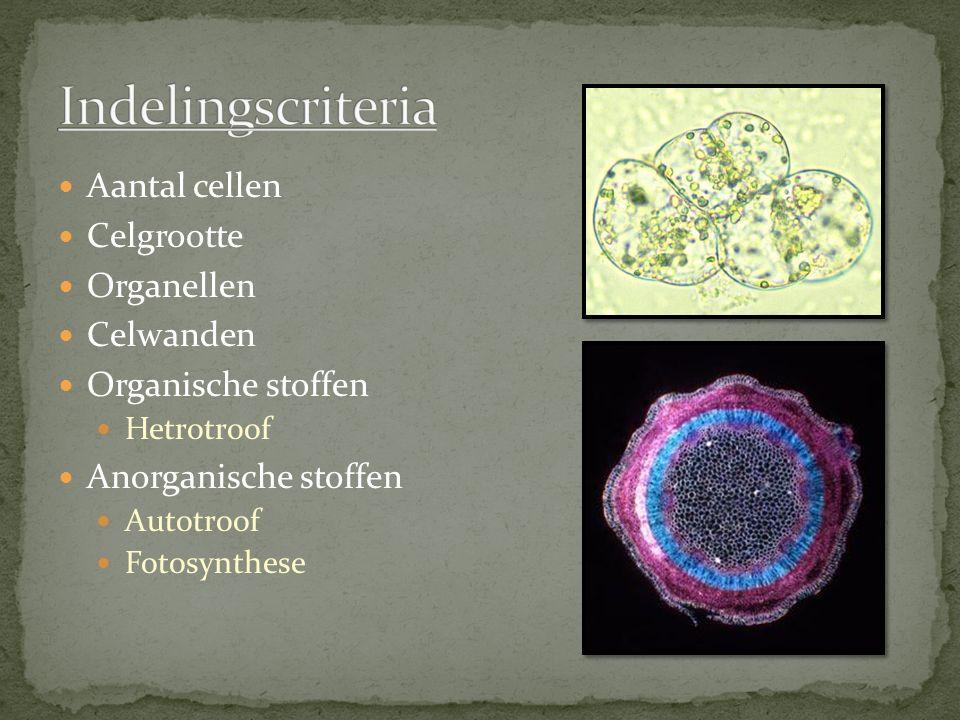 Aantal cellen Celgrootte Organellen Celwanden Organische stoffen Hetrotroof Anorganische stoffen Autotroof Fotosynthese