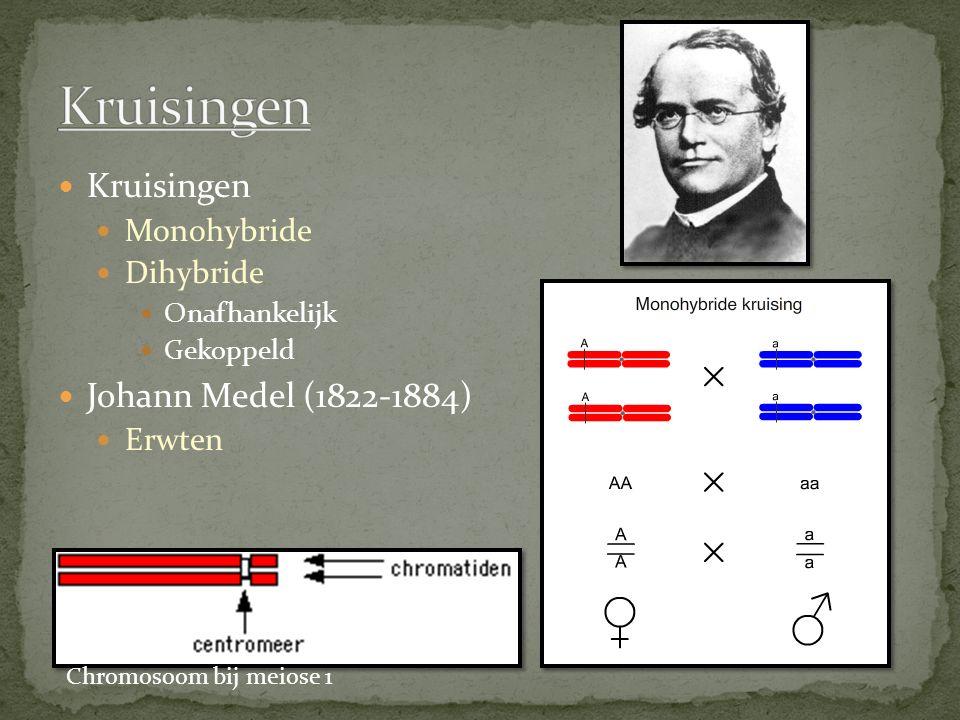 Kruisingen Monohybride Dihybride Onafhankelijk Gekoppeld Johann Medel (1822-1884) Erwten Chromosoom bij meiose 1