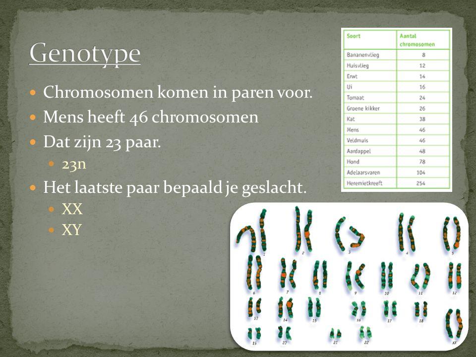 Chromosomen komen in paren voor. Mens heeft 46 chromosomen Dat zijn 23 paar. 23n Het laatste paar bepaald je geslacht. XX XY