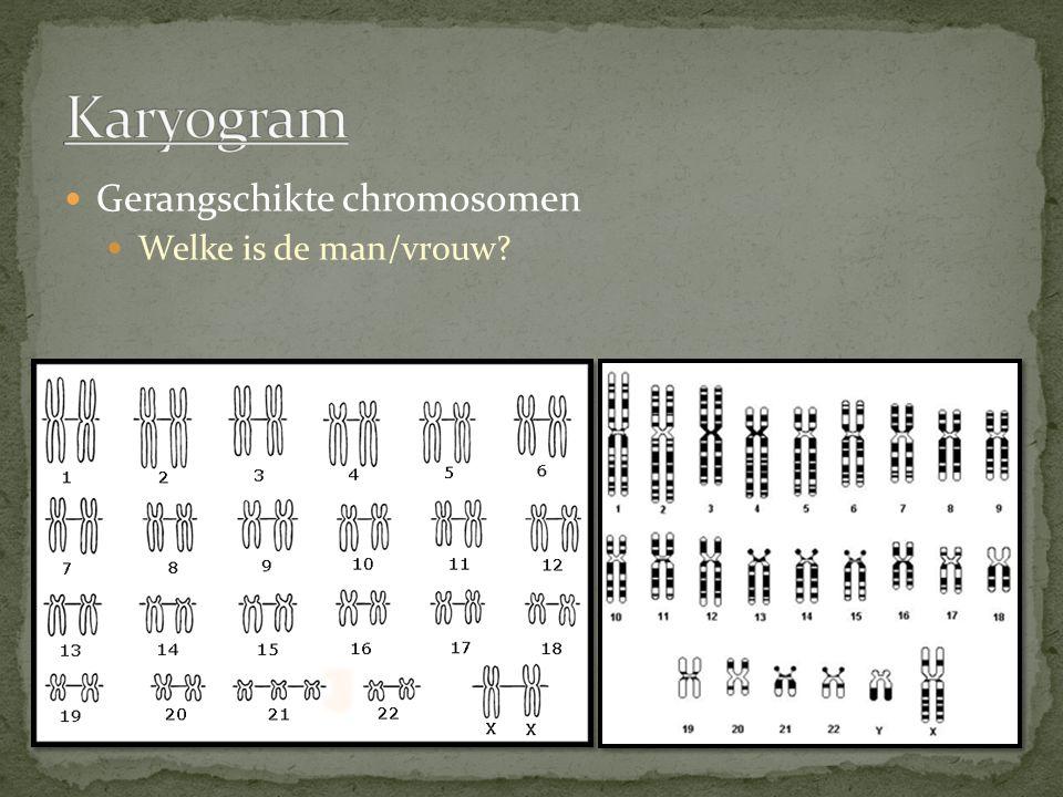 Alles in 46 chromosomen (hele lichaam, elke cel) Chromosomen bestaan uit genen Een gen geeft de informatie voor 1 eigenschap.
