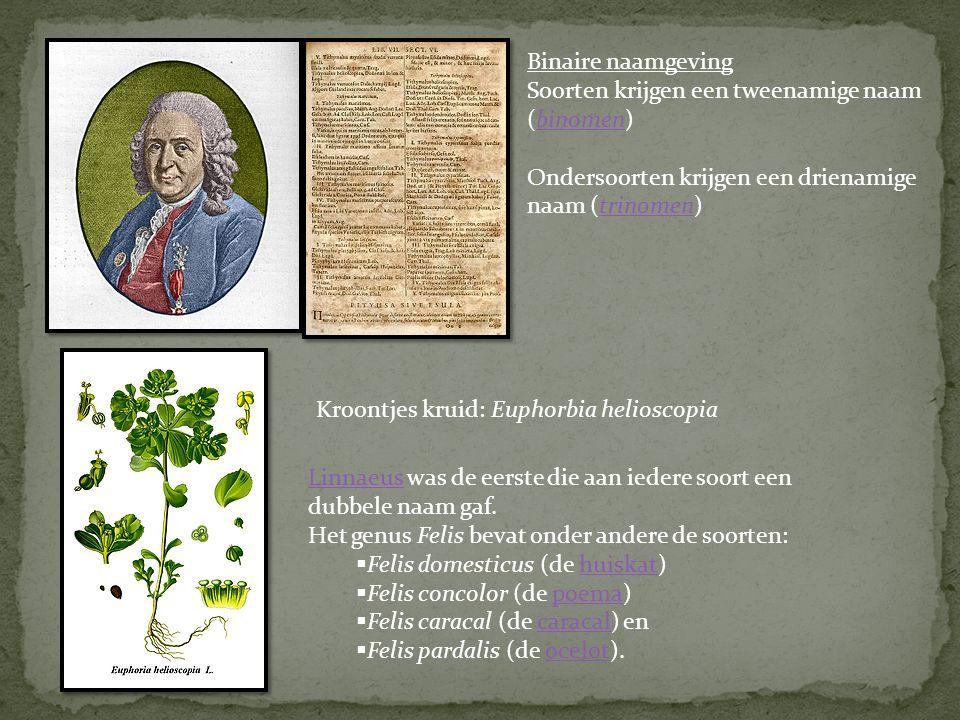 Eerste beschreven in 1600 door Antony van Leeuwenhoek met de eerste microscoop die hij had gebouwd.