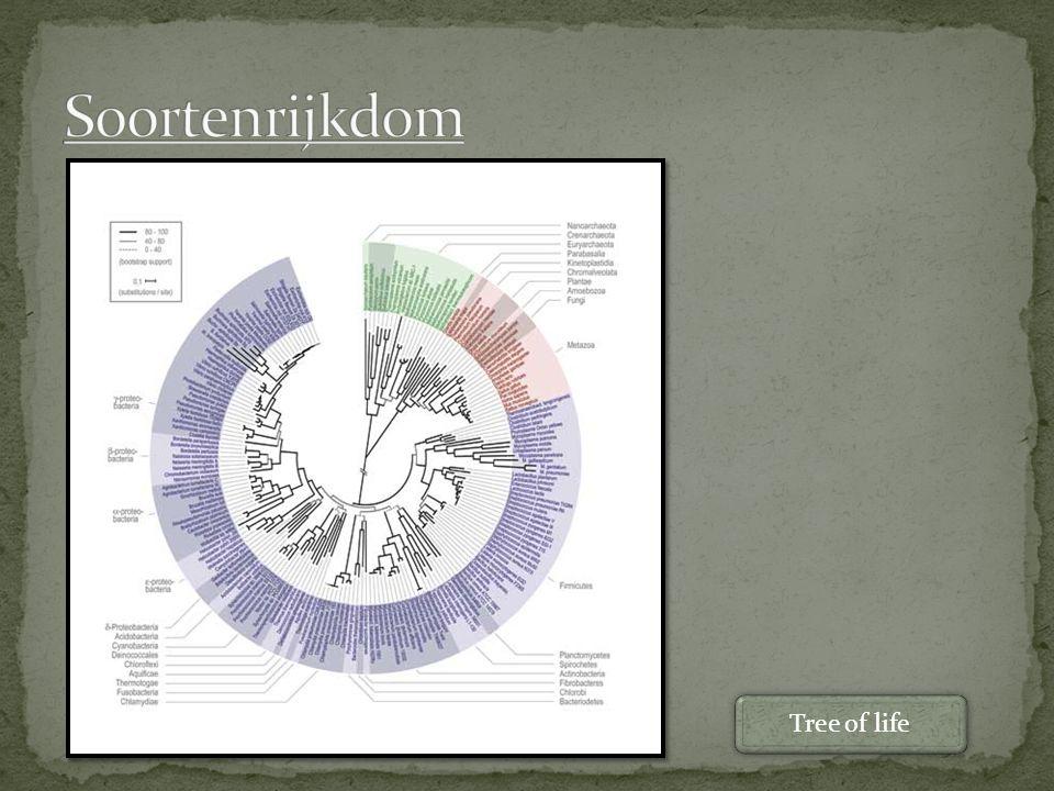Taxonomie Groeperen op basis morfologische bouw Hiërarchische opbouw Taxon (8 stuks) Cladistiek Groeperen op basis van gemeenschappelijke voorouder (fylogenetisch) Clades Een clade is een groep organismen en al zijn afstammelingen