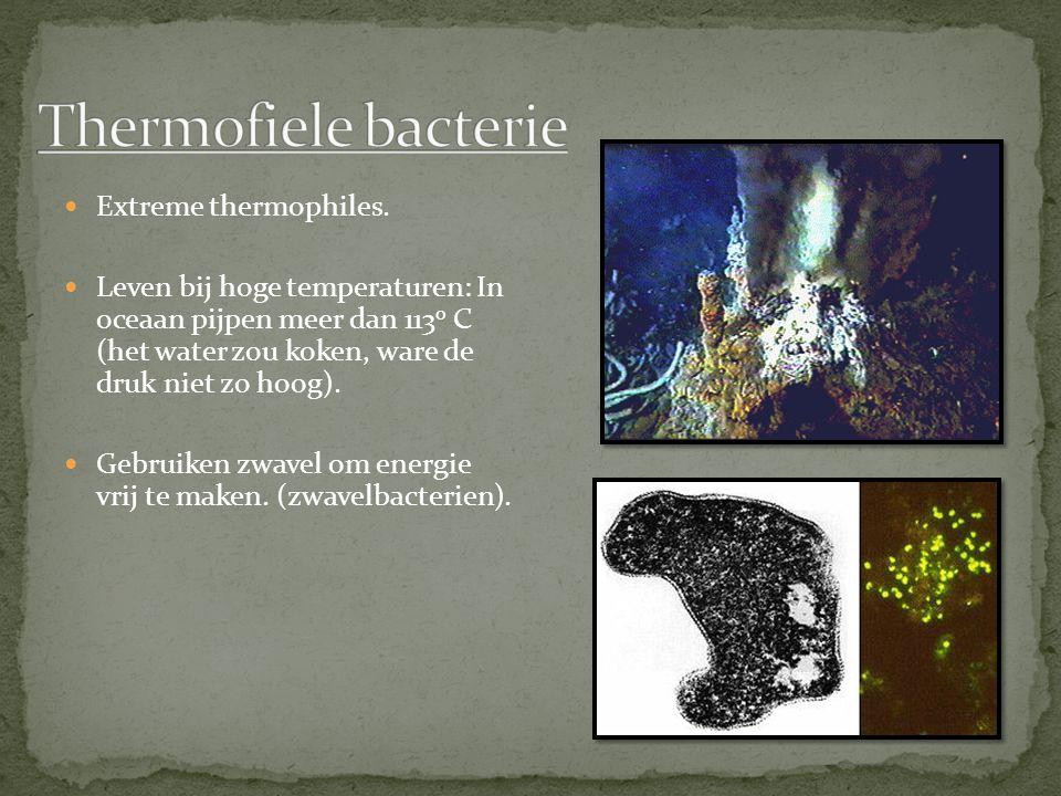 Meest voorkomende bacterien Veel groepen Entero bacterie: leeft in de darmen van dieren.