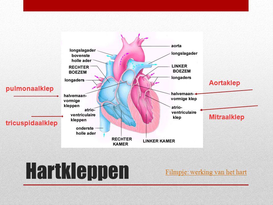 Hartkleppen Mitraalklep Aortaklep pulmonaalklep tricuspidaalklep Filmpje: werking van het hart