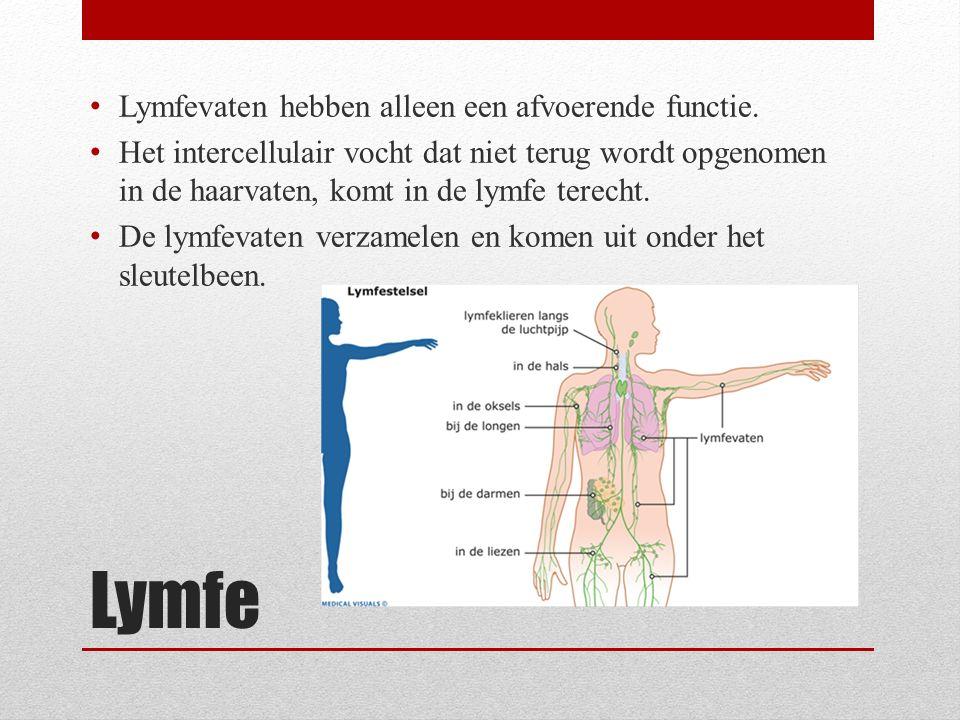 Lymfe Lymfevaten hebben alleen een afvoerende functie. Het intercellulair vocht dat niet terug wordt opgenomen in de haarvaten, komt in de lymfe terec