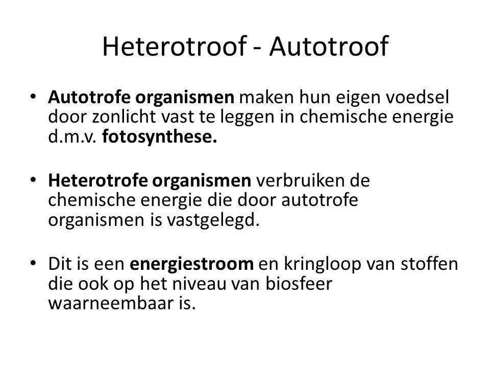 Heterotroof - Autotroof Autotrofe organismen maken hun eigen voedsel door zonlicht vast te leggen in chemische energie d.m.v.