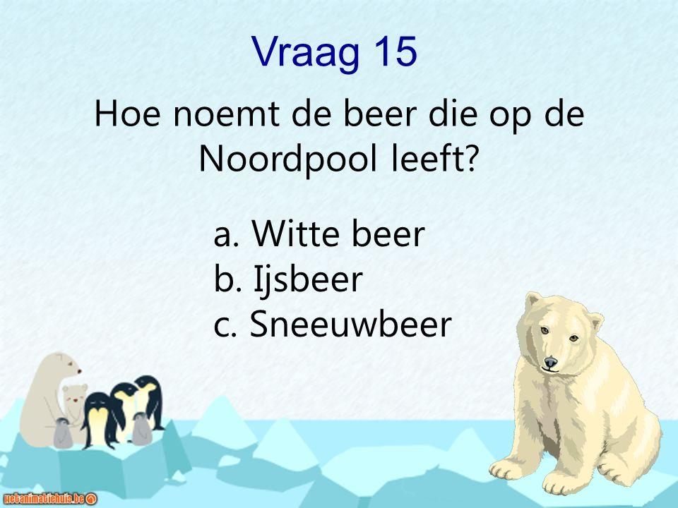 Vraag 15 Hoe noemt de beer die op de Noordpool leeft? a. Witte beer b. Ijsbeer c. Sneeuwbeer