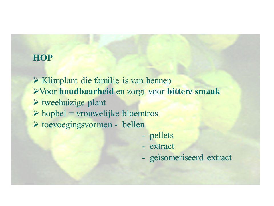 HOP  Klimplant die familie is van hennep  Voor houdbaarheid en zorgt voor bittere smaak  tweehuizige plant  hopbel = vrouwelijke bloemtros  toevo