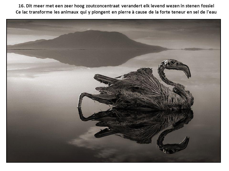 16. Dit meer met een zeer hoog zoutconcentraat verandert elk levend wezen in stenen fossiel Ce lac transforme les animaux qui y plongent en pierre à c