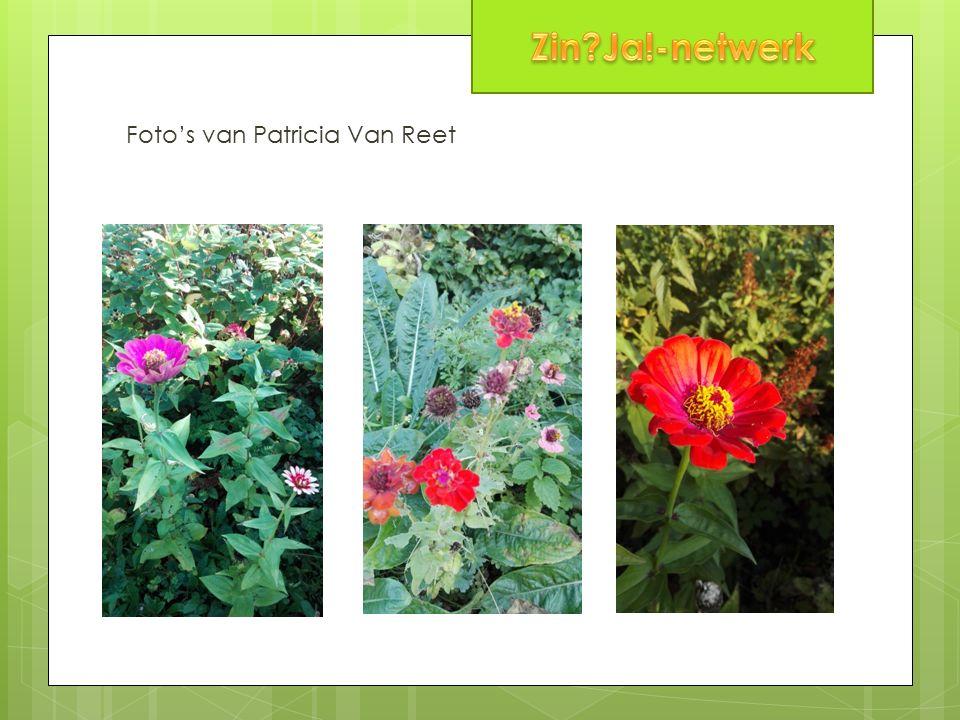Foto's van Patricia Van Reet