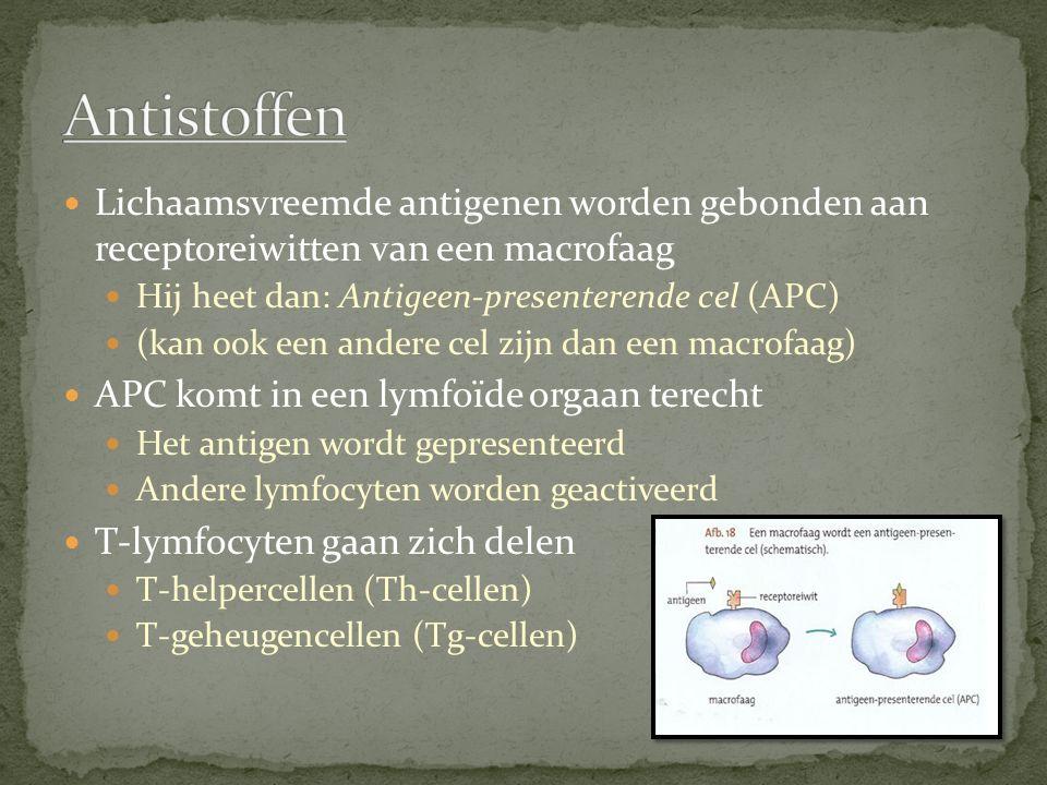Lichaamsvreemde antigenen worden gebonden aan receptoreiwitten van een macrofaag Hij heet dan: Antigeen-presenterende cel (APC) (kan ook een andere ce