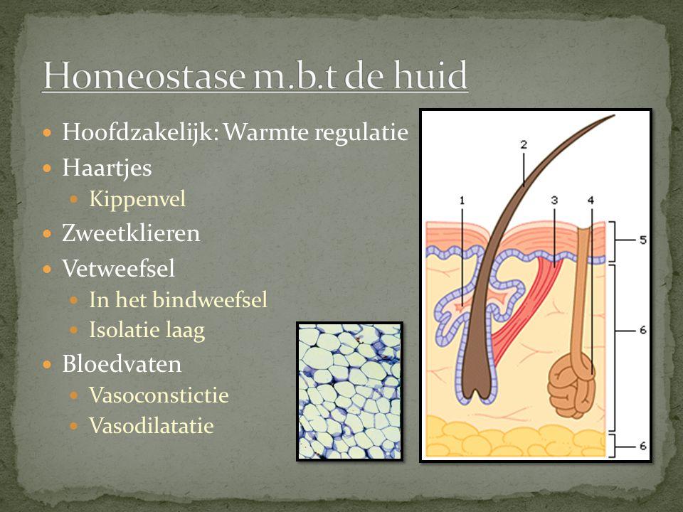 Hoofdzakelijk: Warmte regulatie Haartjes Kippenvel Zweetklieren Vetweefsel In het bindweefsel Isolatie laag Bloedvaten Vasoconstictie Vasodilatatie