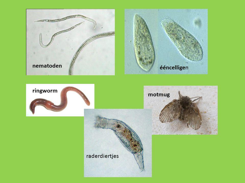 nematoden ééncelligen ringworm motmug raderdiertjes