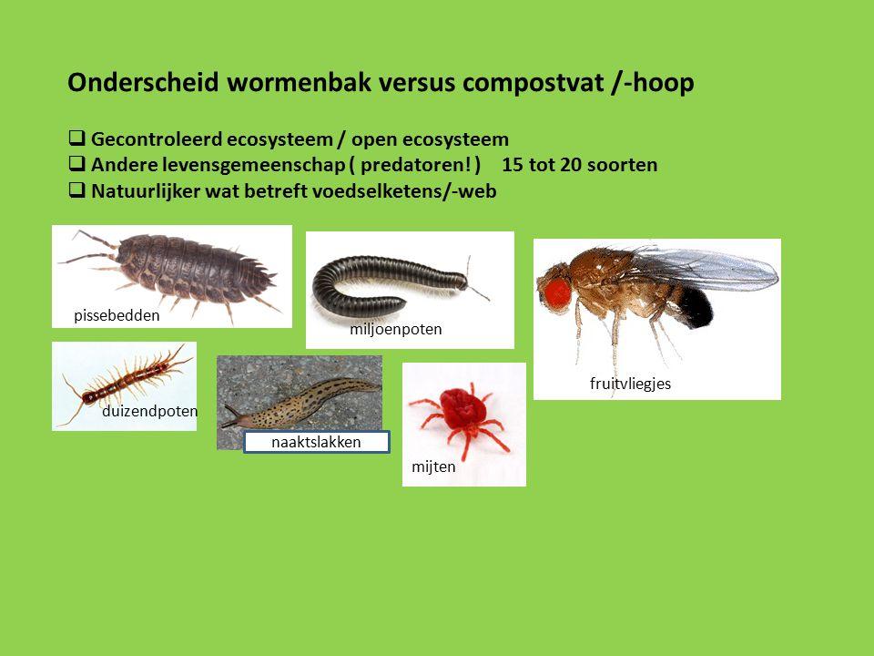 Onderscheid wormenbak versus compostvat /-hoop  Gecontroleerd ecosysteem / open ecosysteem  Andere levensgemeenschap ( predatoren.