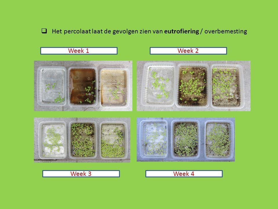 Week 1Week 2 Week 3Week 4  Het percolaat laat de gevolgen zien van eutrofiering / overbemesting