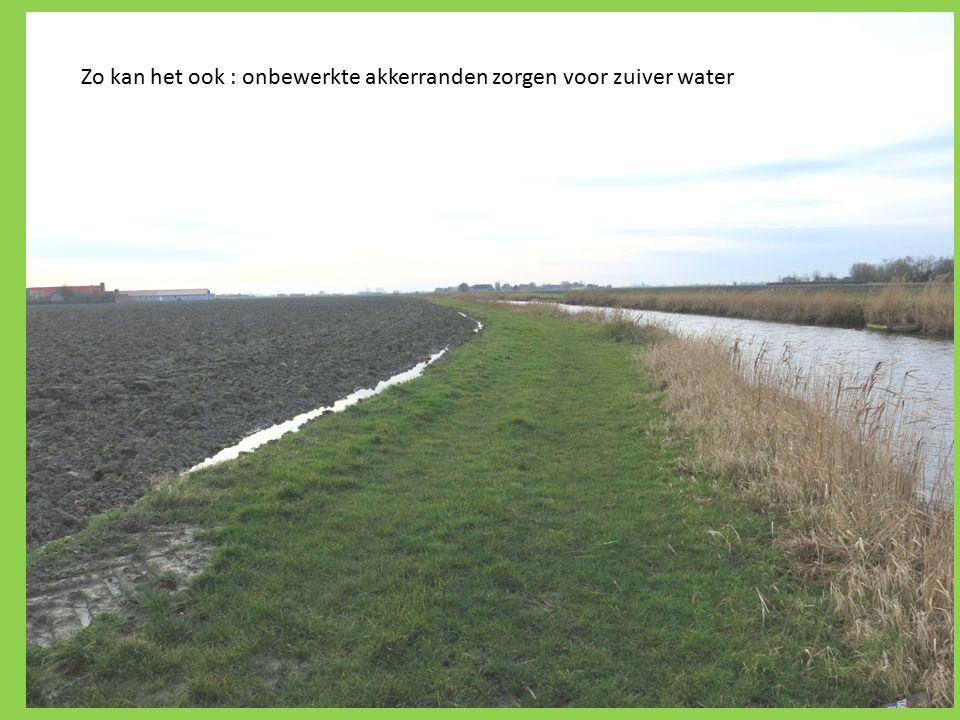 Zo kan het ook : onbewerkte akkerranden zorgen voor zuiver water