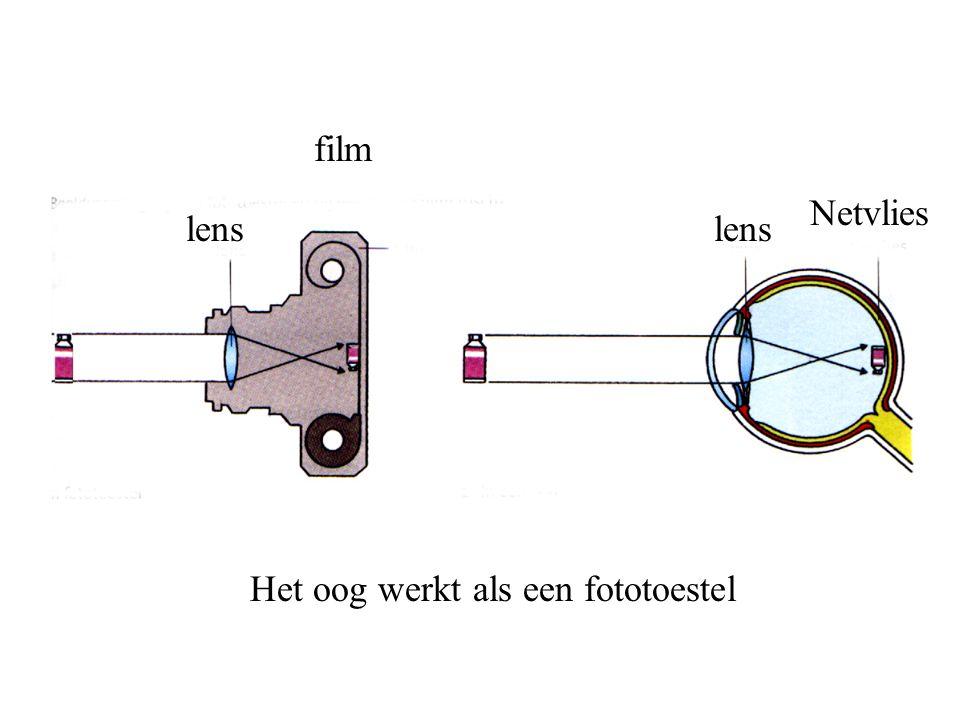 Het oog werkt als een fototoestel lens film Netvlies