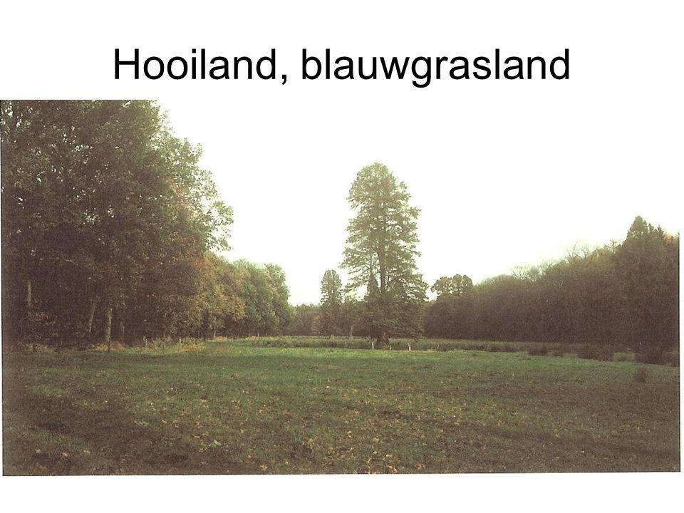 Hooiland, blauwgrasland