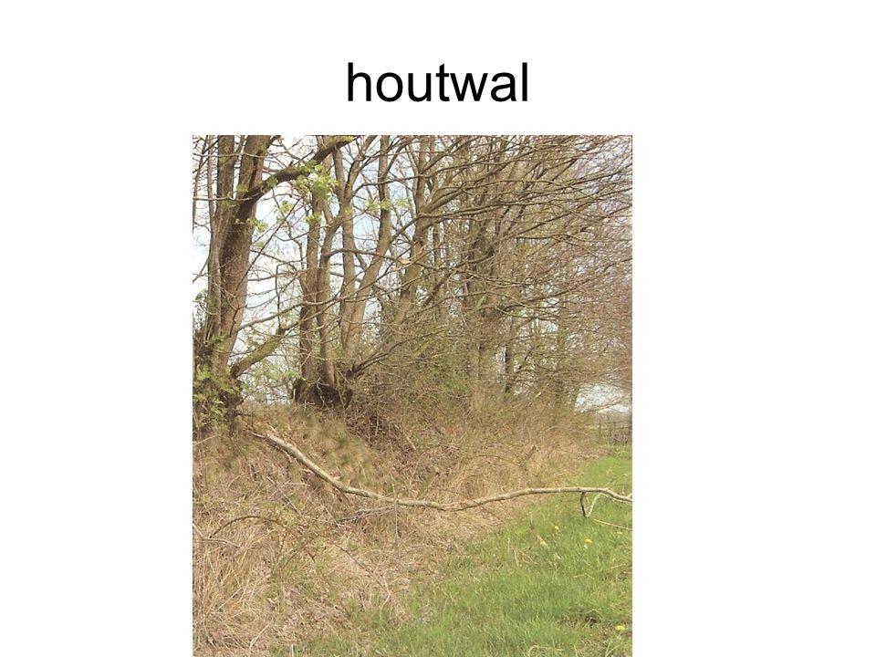 houtwal