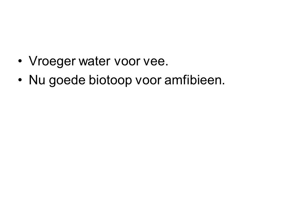 Vroeger water voor vee. Nu goede biotoop voor amfibieen.