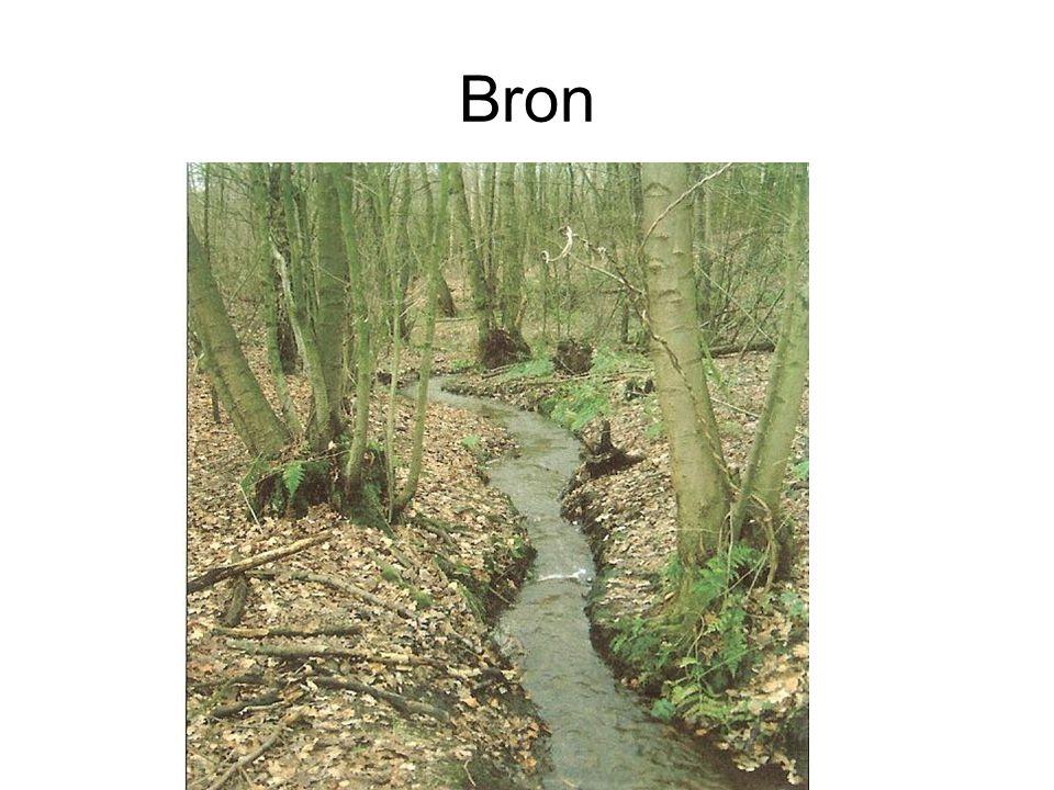Plek waar stromend grondwater (soms) aan de oppervlakte komt.