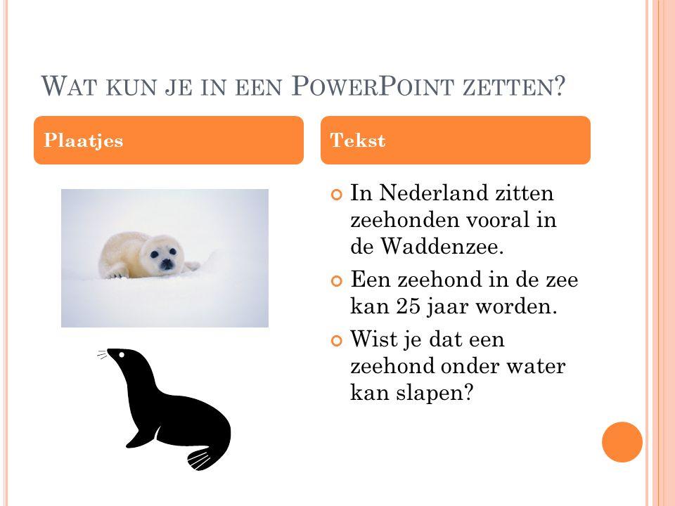 W AT KUN JE IN EEN P OWER P OINT ZETTEN ? In Nederland zitten zeehonden vooral in de Waddenzee. Een zeehond in de zee kan 25 jaar worden. Wist je dat