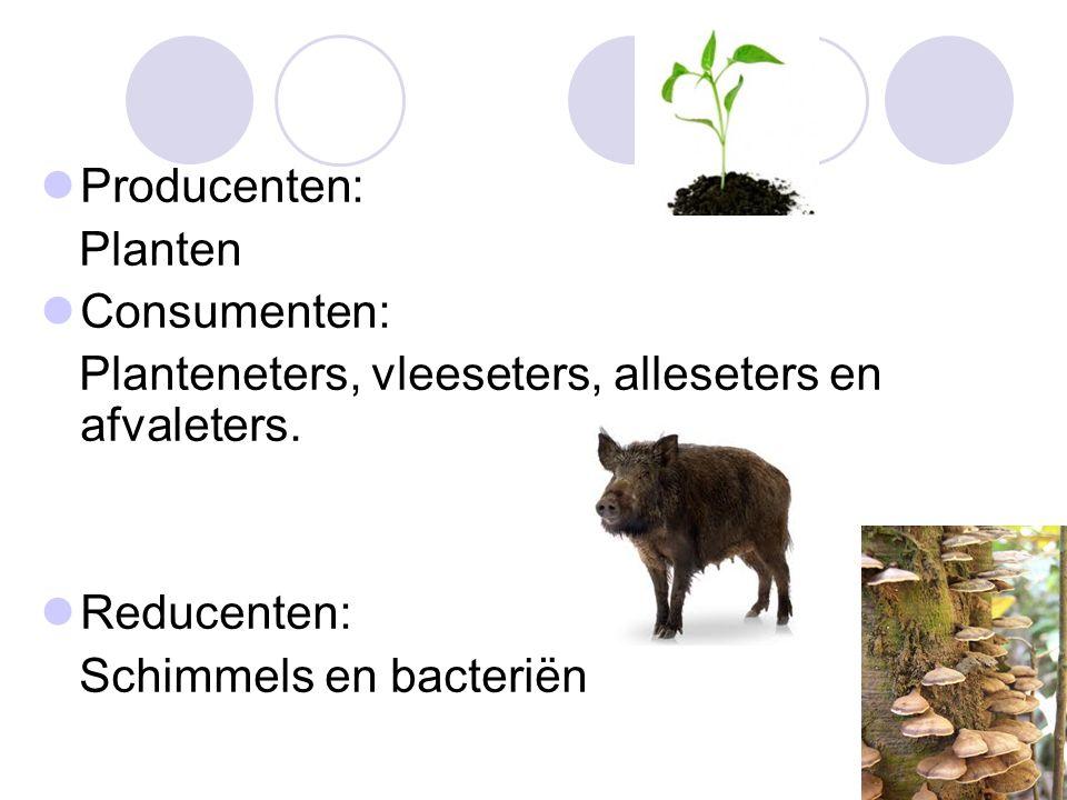 Producenten: Planten Consumenten: Planteneters, vleeseters, alleseters en afvaleters. Reducenten: Schimmels en bacteriën