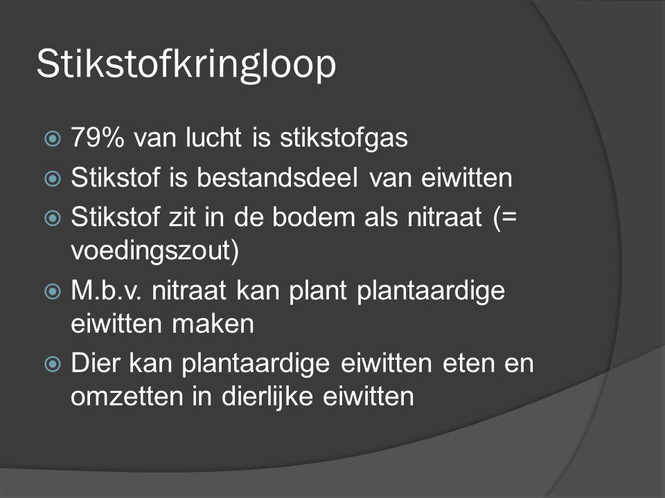 Stikstofkringloop  79% van lucht is stikstofgas  Stikstof is bestandsdeel van eiwitten  Stikstof zit in de bodem als nitraat (= voedingszout)  M.b
