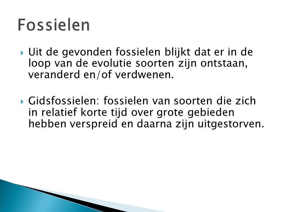  Fossielen kunnen ontstaan als dode organismen niet vergaan, bijvoorbeeld doordat ze worden bedekt door sedimenten.