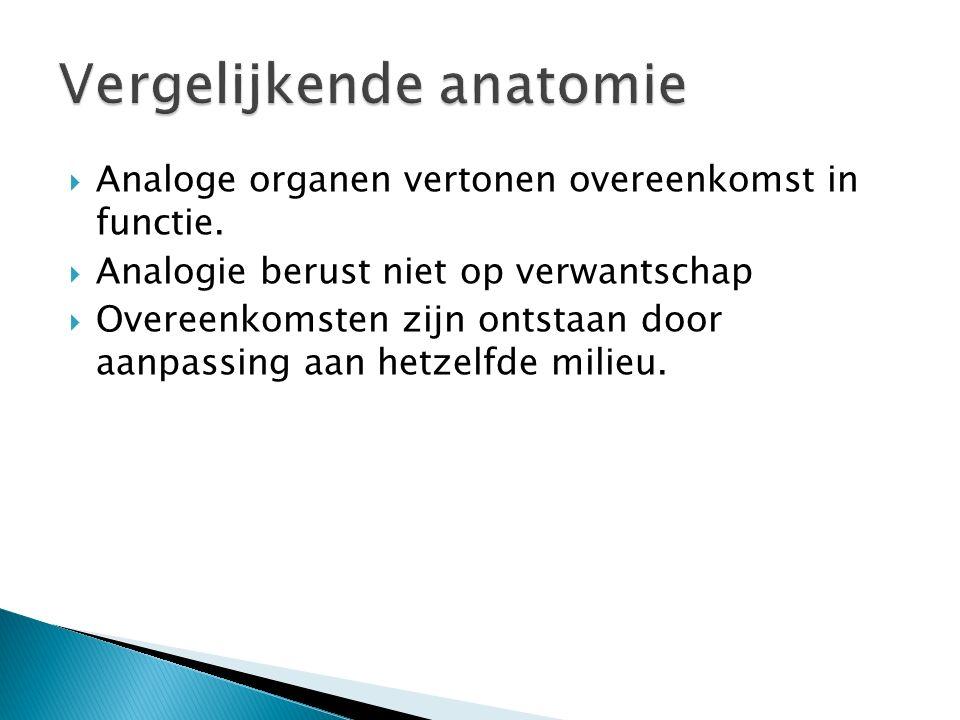  Homologe organen hebben veel overeenkomst in bouw en hebben een gelijke embyonale ontstaanswijze.  Homologie duidt op verwantschap van organismen 
